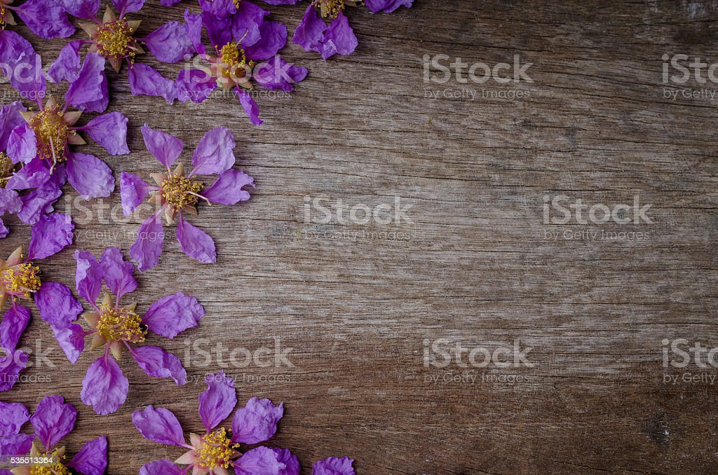 Lagerstroemia floribunda or kedah bungor top view on wooden background stock photo