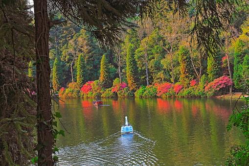 Lago Negro (Black Lake), landscape with azaleas - Gramado, Rio Grande do Sul - Brazil