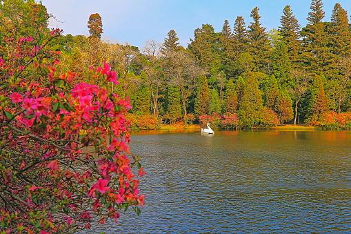 Lago Negro (Black Lake), landscape with azaleas - Gramado, Rio Grande do Sul - Southern Brazil
