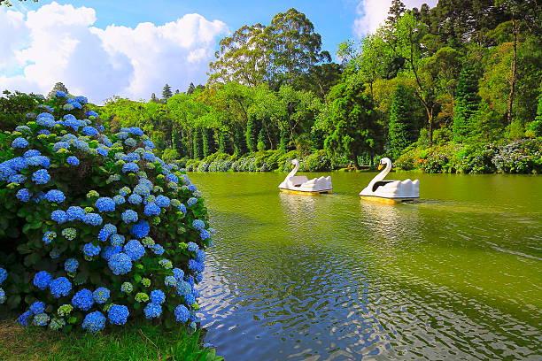 lago negro, primavera paisagem idílica hydrangeas-gramado, sul do brasil - rio grande do sul - fotografias e filmes do acervo