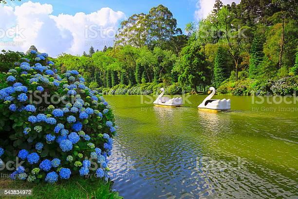 Photo of Lago Negro, spring idyllic landscape Hydrangeas - Gramado, Southern Brazil
