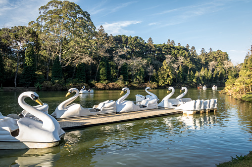 Lago Negro (Black Lake) with Swan Pedal Boats - Gramado, Rio Grande do Sul, Brazil