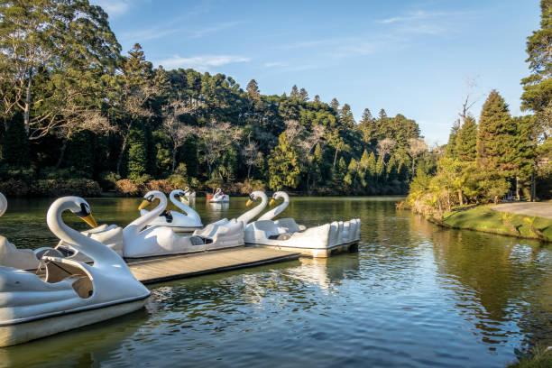ラゴ黒人 (ブラック湖) 白鳥ペダル ボート - グラマド、リオグランデはスル、ブラジル - 小型船舶 ストックフォトと画像