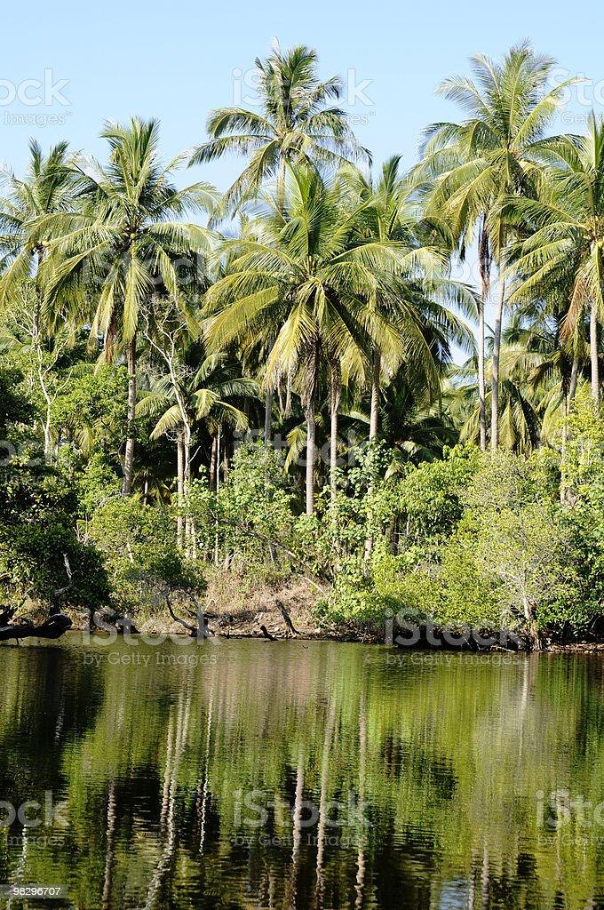 lagoon and jungle royalty-free stock photo