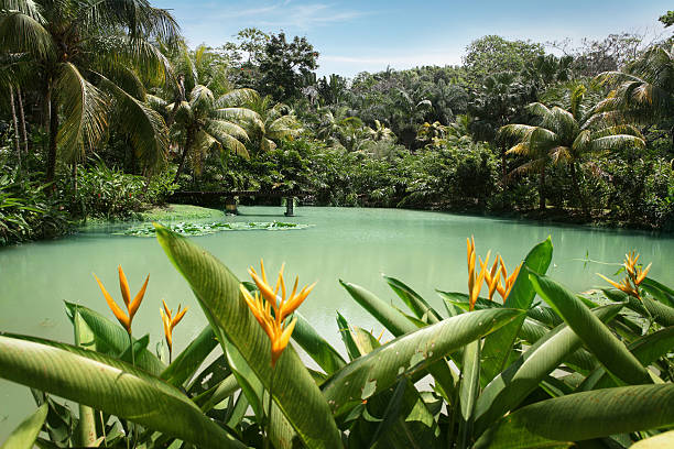 Lagoon at Cranbrook flower forest stock photo
