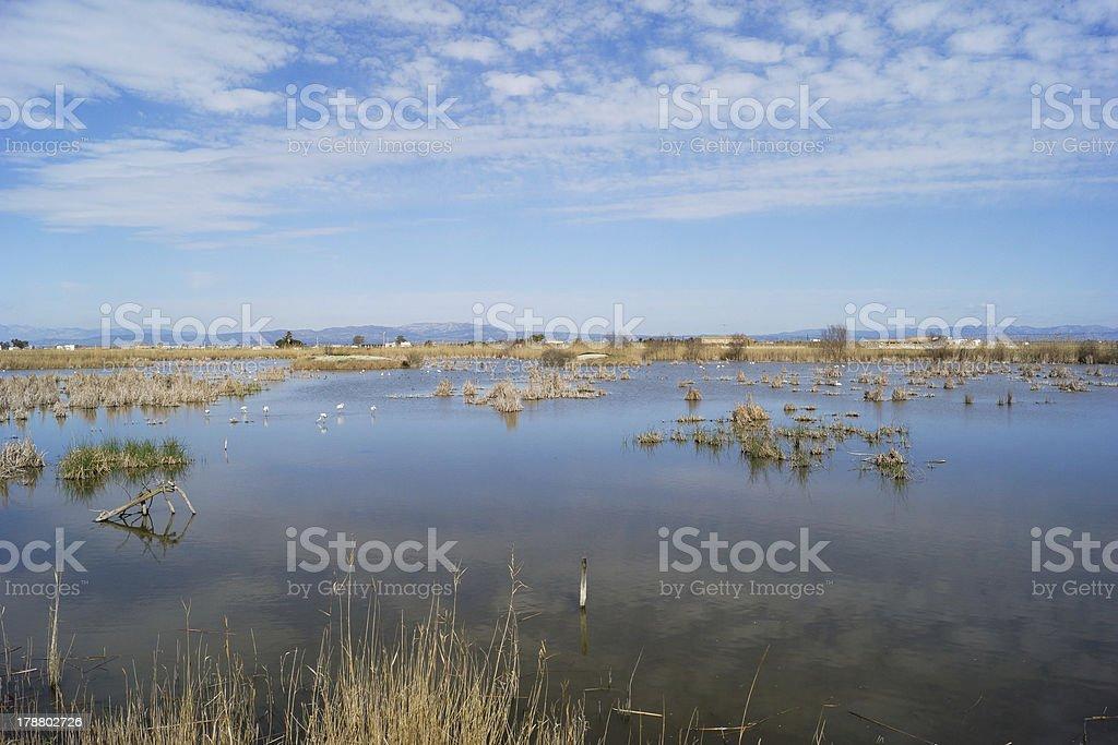 Lagoon in the Ebro Delta stock photo
