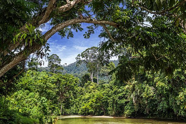 Lagoon in the jungle picture id516229711?b=1&k=6&m=516229711&s=612x612&w=0&h=rdw1kawgw8e9mioeetinp4g74ysvbraq4x pbsrq 9k=