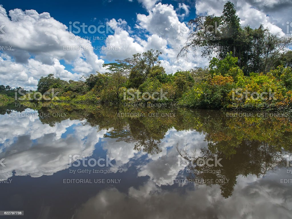 Lagoon of Jaguar stock photo