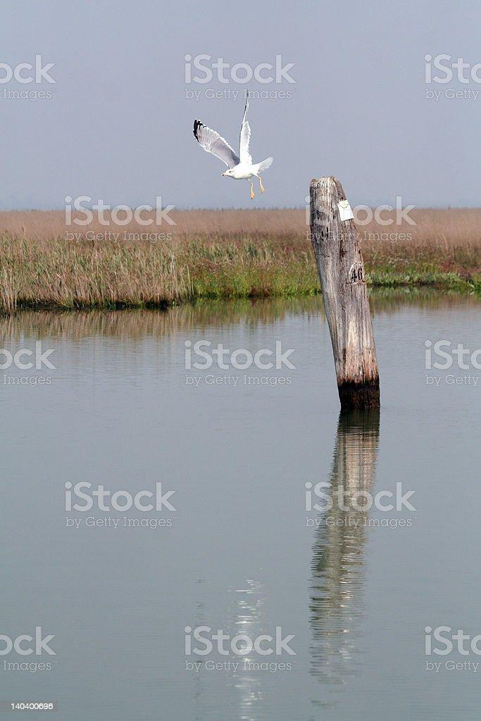 Lagoon of Venice royalty-free stock photo