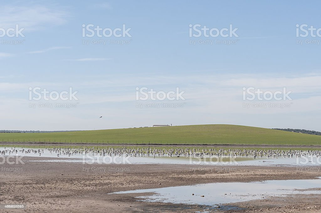 lagoon with seagulls royalty-free stock photo