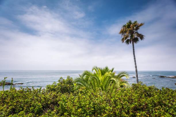 Laguna beach flora Laguna beach green flora gainst blue sky and Pacific ocean miller park stock pictures, royalty-free photos & images
