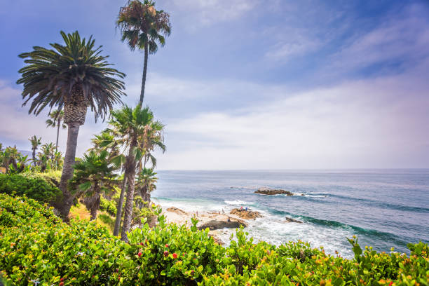 Laguna Beach landscape Laguna Beach landscape with palms and Pacific ocean miller park stock pictures, royalty-free photos & images