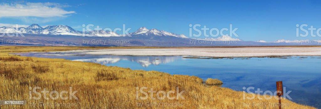 Laguna Cejar in the Atacama desert stock photo