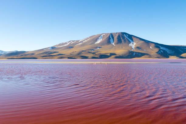 拉古納科羅拉多達景觀, 玻利維亞 - 阿爾蒂普拉諾山脈 個照片及圖片檔