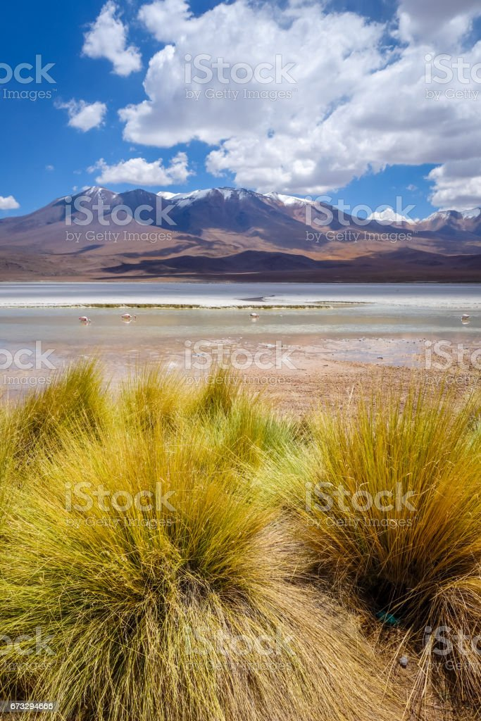 Laguna Honda in sud Lipez Altiplano reserva, Bolivia royalty-free stock photo