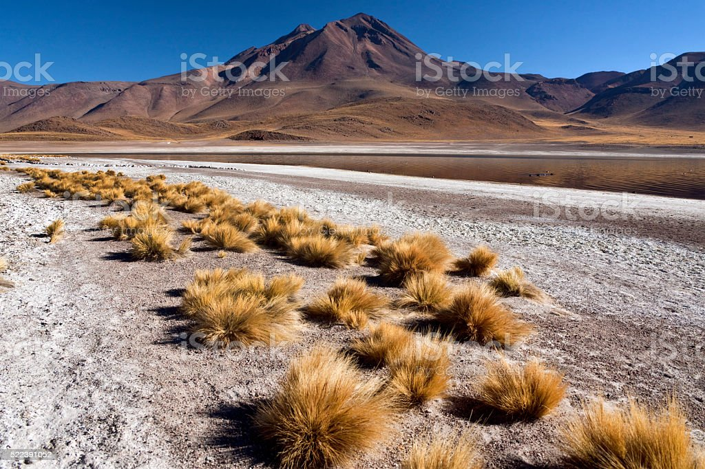 Laguna Miscanti - Atacama Desert - Chile stock photo
