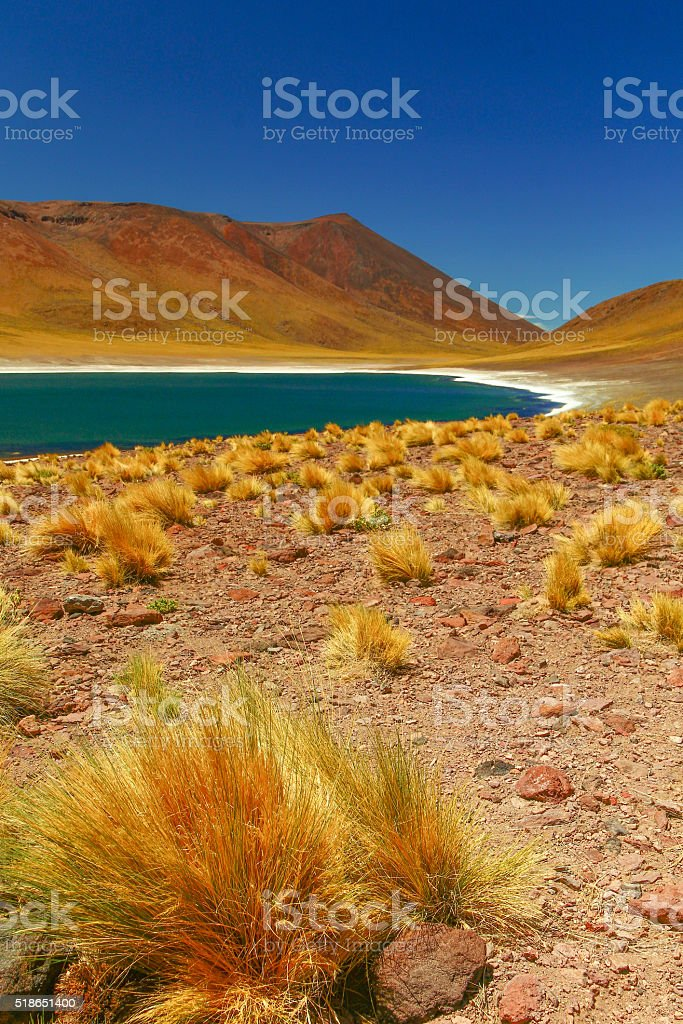 Laguna Miscanti stock photo
