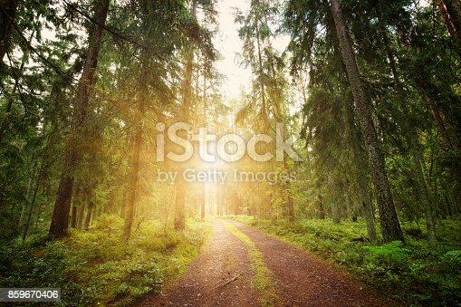istock Lahemaa national park forest panorama 859670406