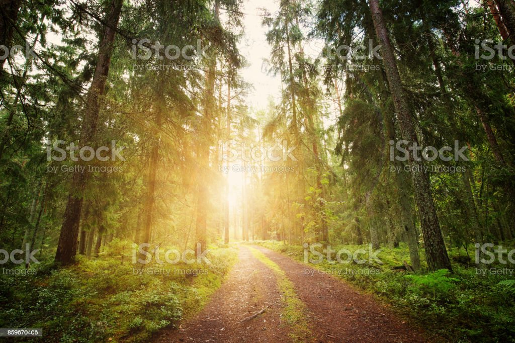 Parque Nacional de Lahemaa panorama da floresta - foto de acervo