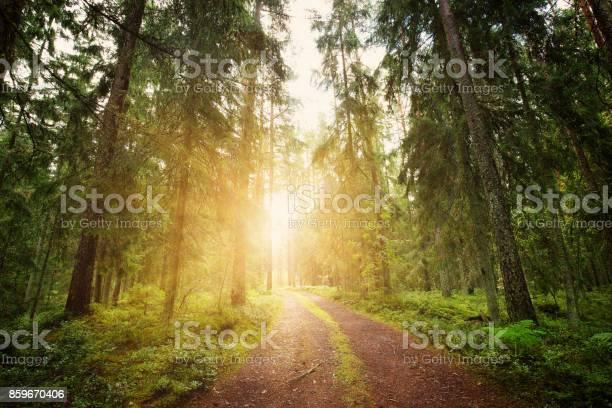 Lahemaa National Park Forest Panorama - Fotografias de stock e mais imagens de Aventura