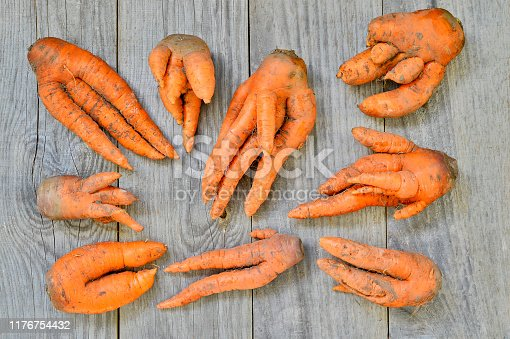 Laid out carrots of non-standard shape on a gray wooden rustic background. Concept ugly vegetables.