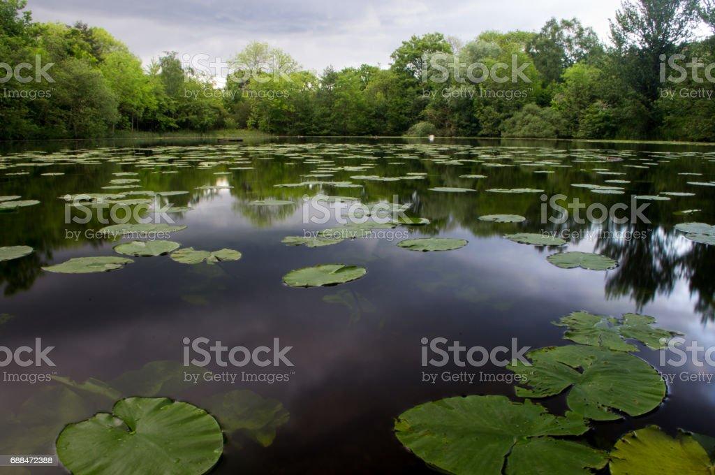 Lake after rain stock photo