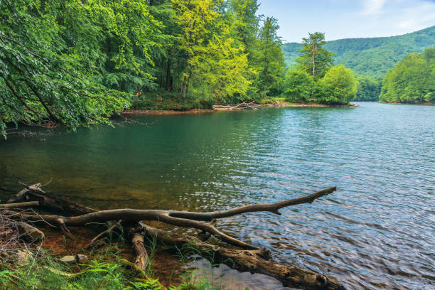 lake among the beech forest stock photo