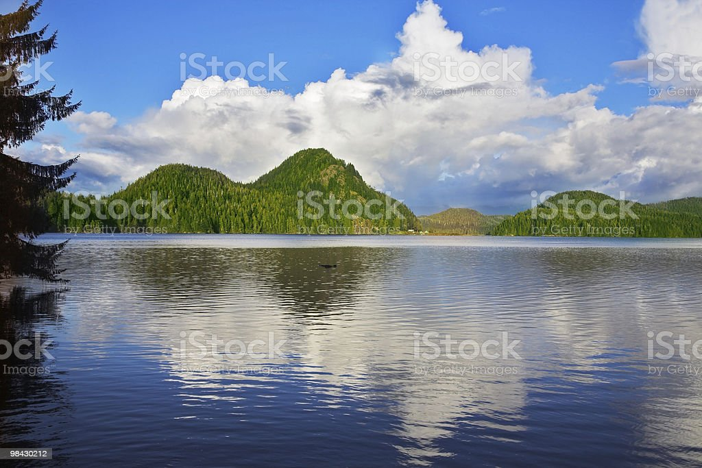 Lake and autumn woods royalty-free stock photo