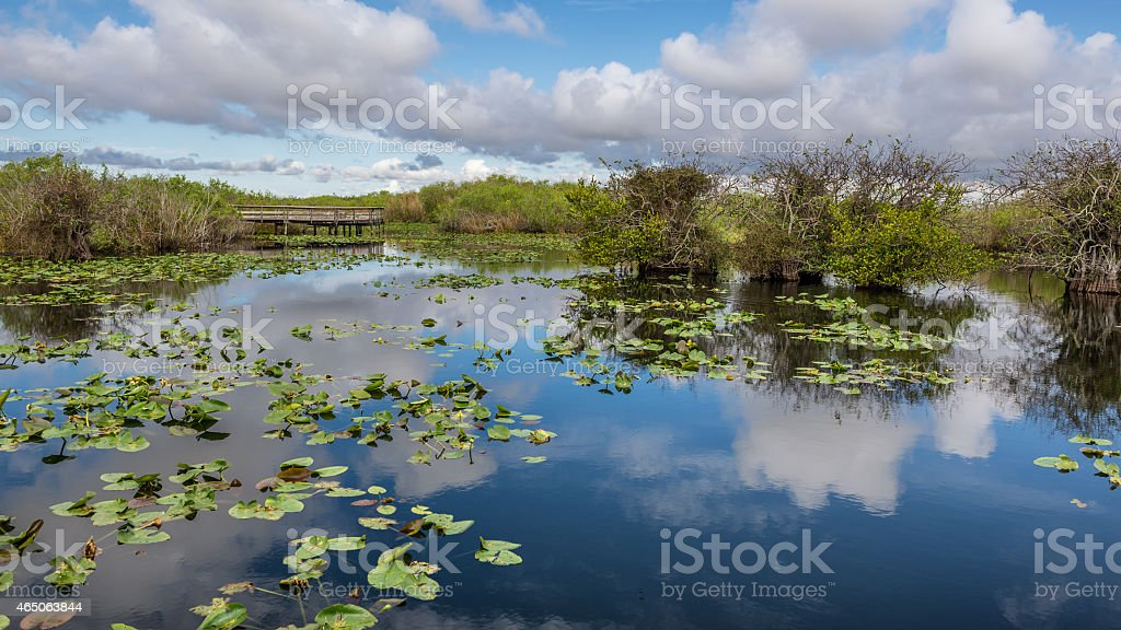 Lake and boardwalk in the Everglades stock photo