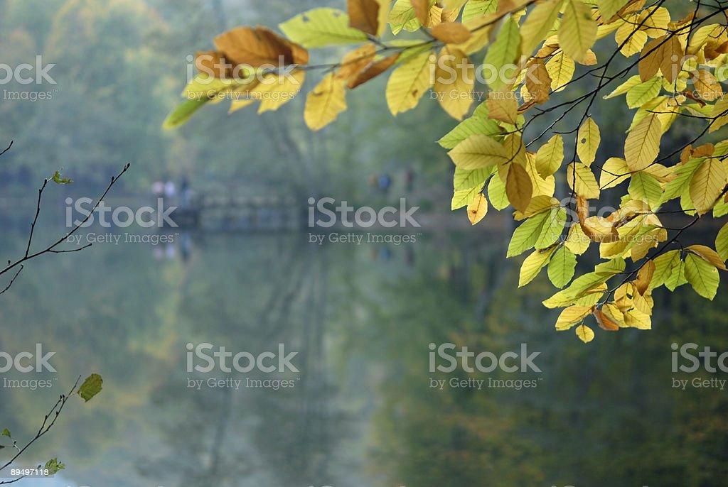 Lake i Liść zbiór zdjęć royalty-free