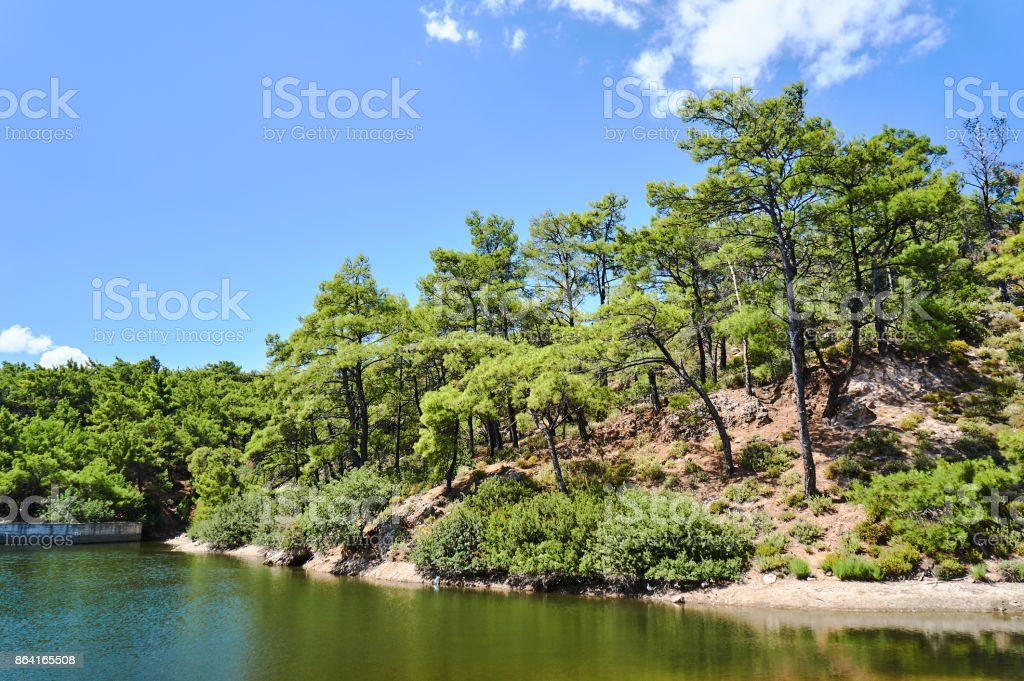 Lake and pine forest royalty-free stock photo