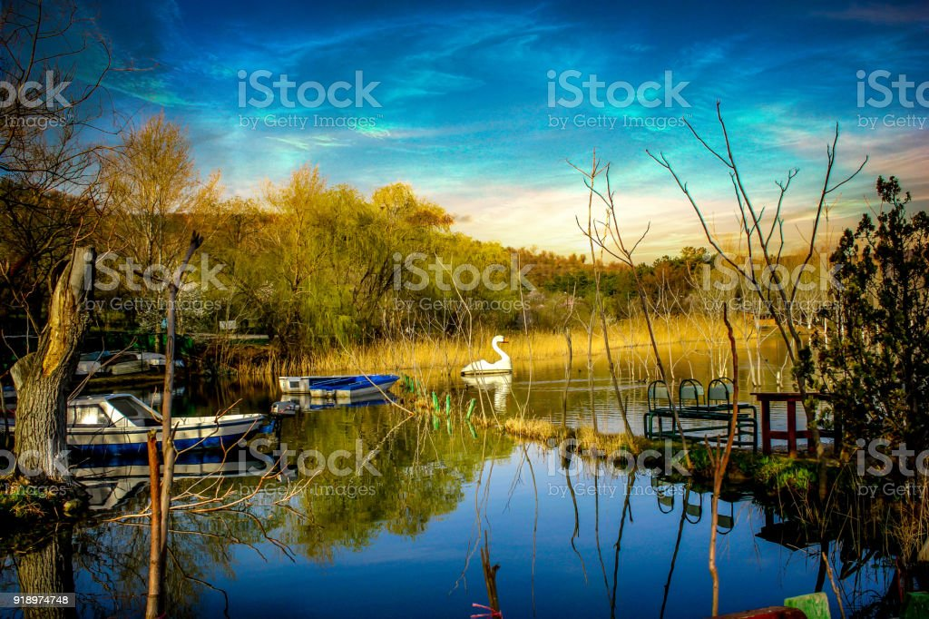Lake and Swan stock photo