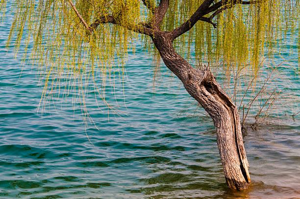 See und Weide im Frühling – Foto