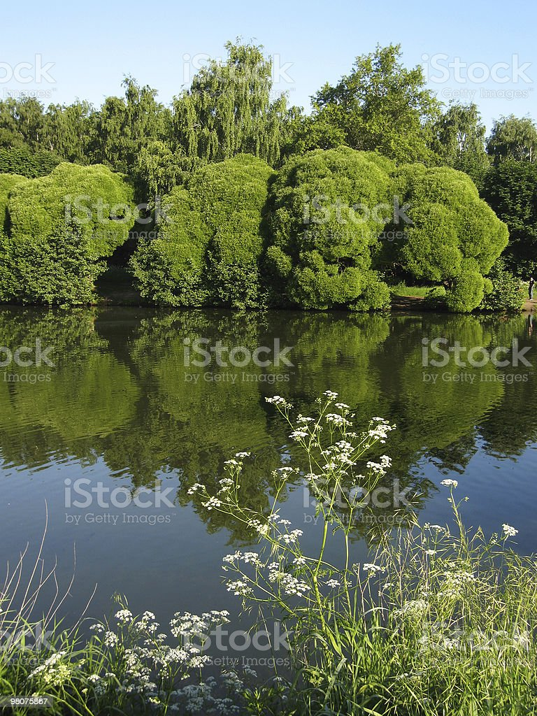 Lake and willows, vertical royalty-free stock photo