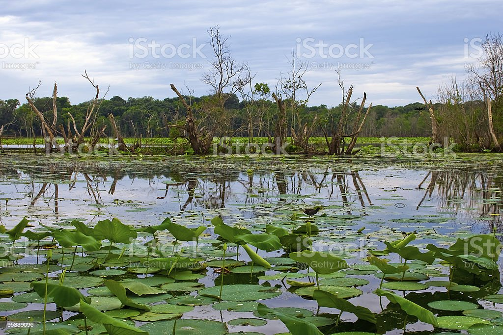 Lake at Brazos Bend State Park royalty-free stock photo