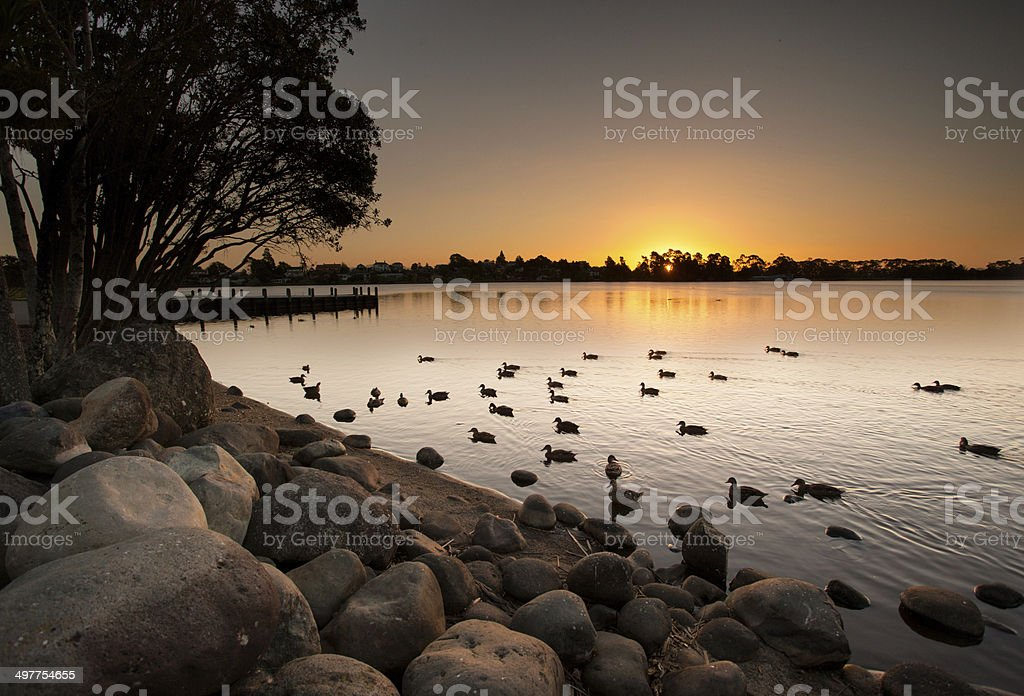 Lake at sunset with ducks stock photo