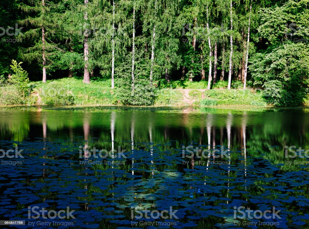 Lake bank at forest background royalty-free stock photo