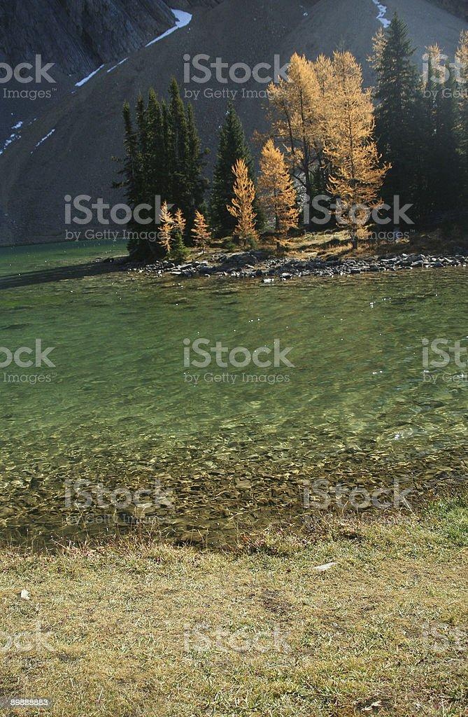 Lago de otoño larches Chester foto de stock libre de derechos