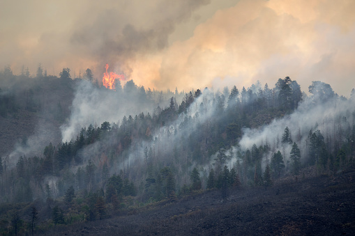 Lake Christine forest fire burns out of control on Basalt Mountain as wind blows it through the pine trees above Highway 82 in the town of Basalt in Eagle County Colorado on July, 2018.