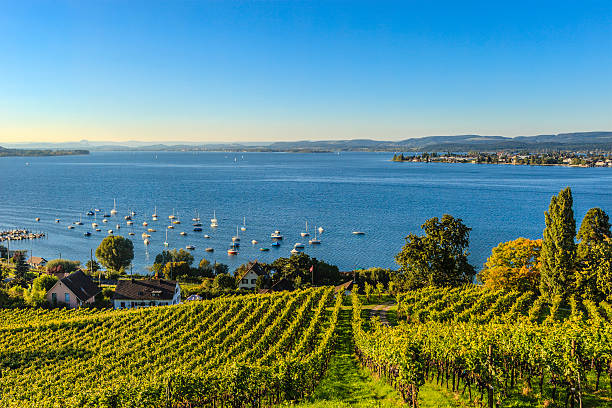 Lake Constance - Bodensee Lake Constance, Bodensee, is a lake situated on the border between Germany, Switzerland and Austria, at the northern foot of the Alps. Bodensee stock pictures, royalty-free photos & images