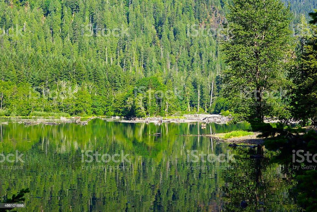 Lake Cushman Green Cove stock photo