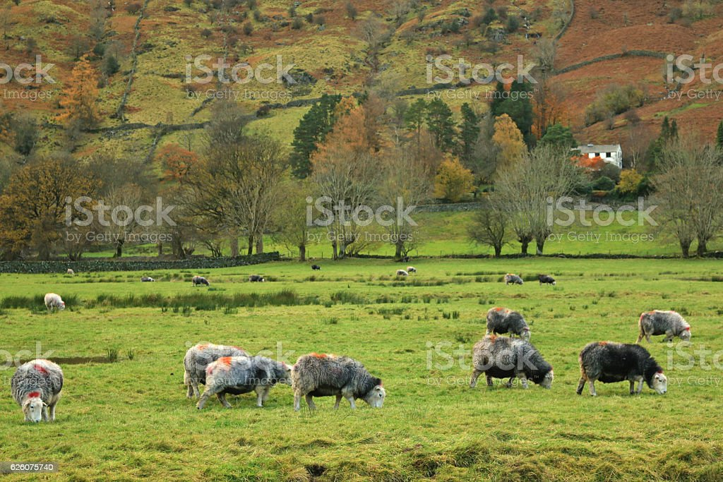 Lake District, England stock photo