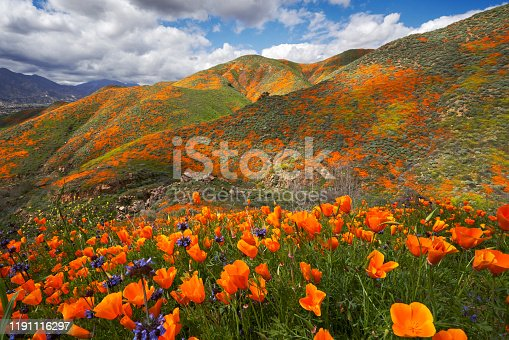The interplay of clouds and light make this a constantly changing tapestry of poppies, mustard, phacelia, and lupine near Lake Elsinore in Southern California