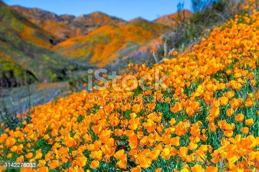 California poppy superbloom lake Elsinore walker canyon