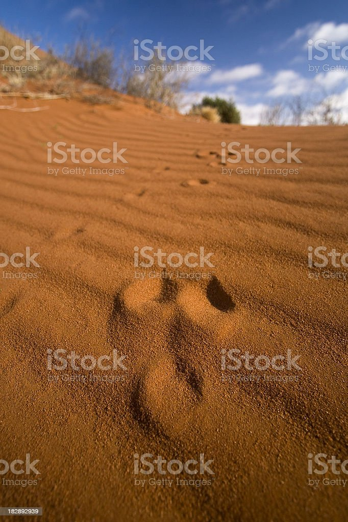 Lake Eyre Kangaroo Print royalty-free stock photo