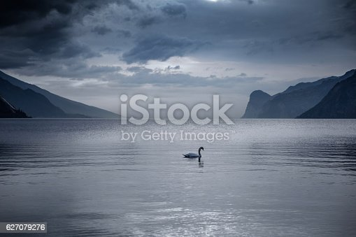 Lake Garda in Italy - Swan swimming into the lake.