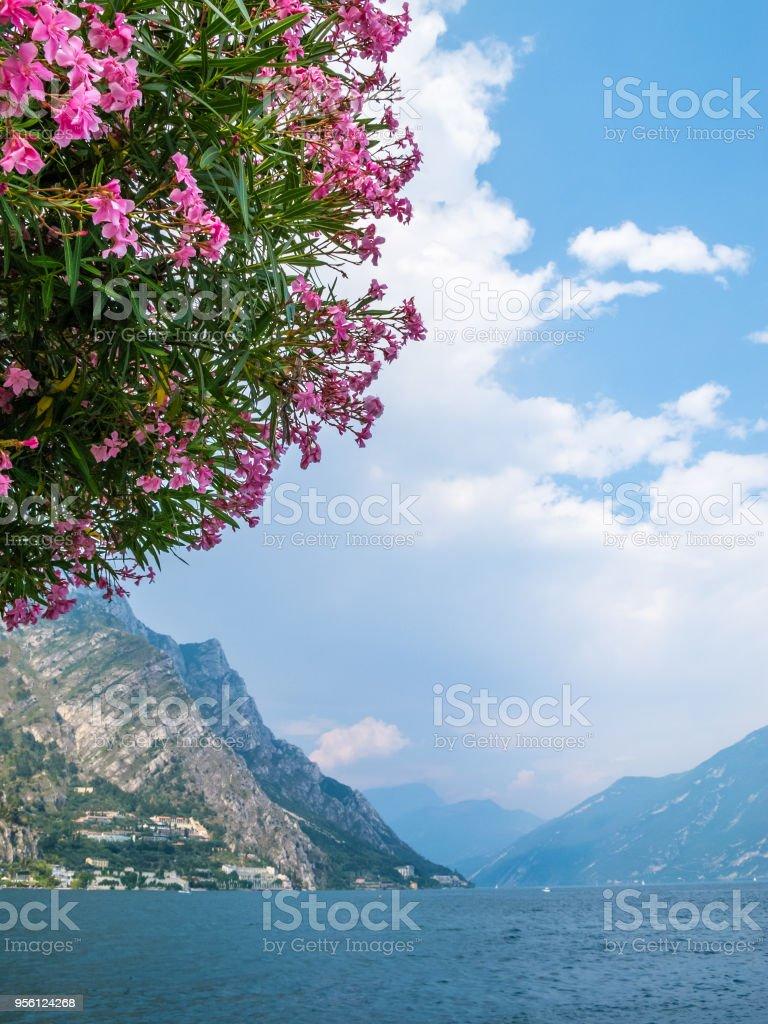 Gardasee Mit Den Blumen Ein Nerium Oleander Baum Im Vordergrund ...