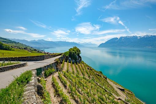 Lake Geneva and a panoramic view on the alps, Switzerland