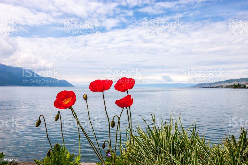 Lake Geneva and Alps, Montreux, Switzerland stock photo