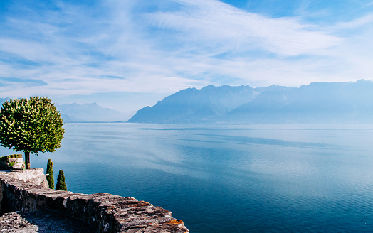 Lake Geneva blue water in Chexbres Lavaux with lone tree